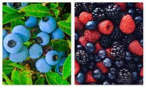 Summer Berries and Bounty + Desserts, Wine and Cheese