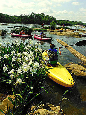 Kayaking amongst spider lillies